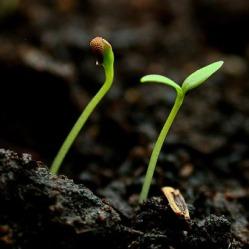 good-soil-soul.jpg